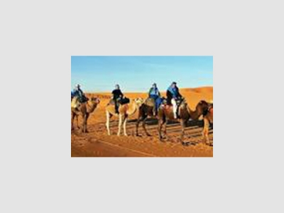 Camel Expeditions
