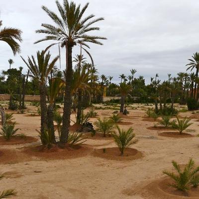 Photo Ballade privée à dos de chameau dans la Palmeraie de Marrakech