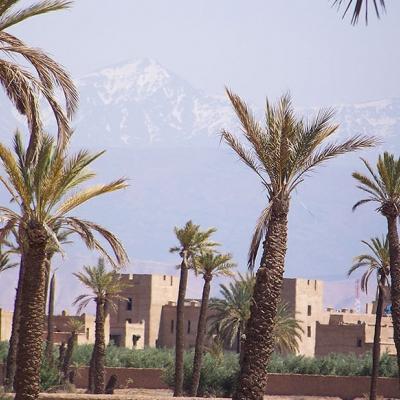 Photo Coucher du soleil à dos de chameau à la Pameraie de Marrakech