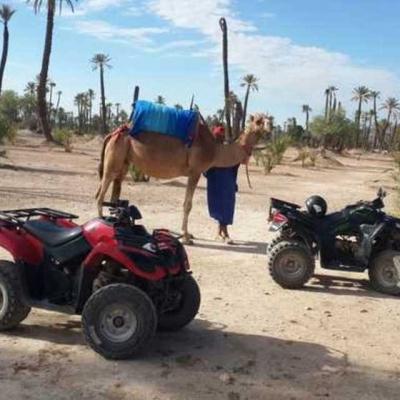 Photo Palmeraie de Marrakech: balade en chameau et quad