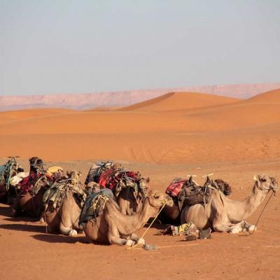 Photo Voyage de 2 jours dans le désert depuis Marrakech